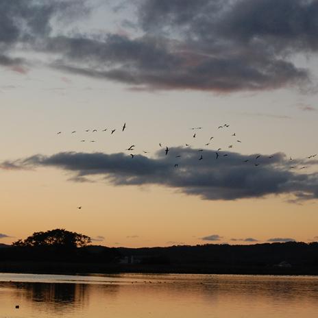 マガンの集まる美しい沼、宮島沼