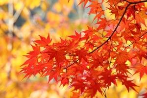 momiji02 紅葉.jpg