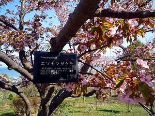 kind_ezoyama01.jpg