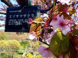 kind_ezoyama02.jpg